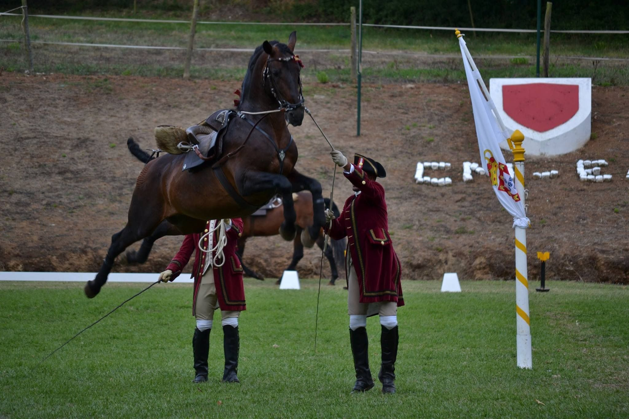 Pin By Tiago Amaral Carvalho On Equestrian Schools Lusitano Horse Horse Breeds Horses