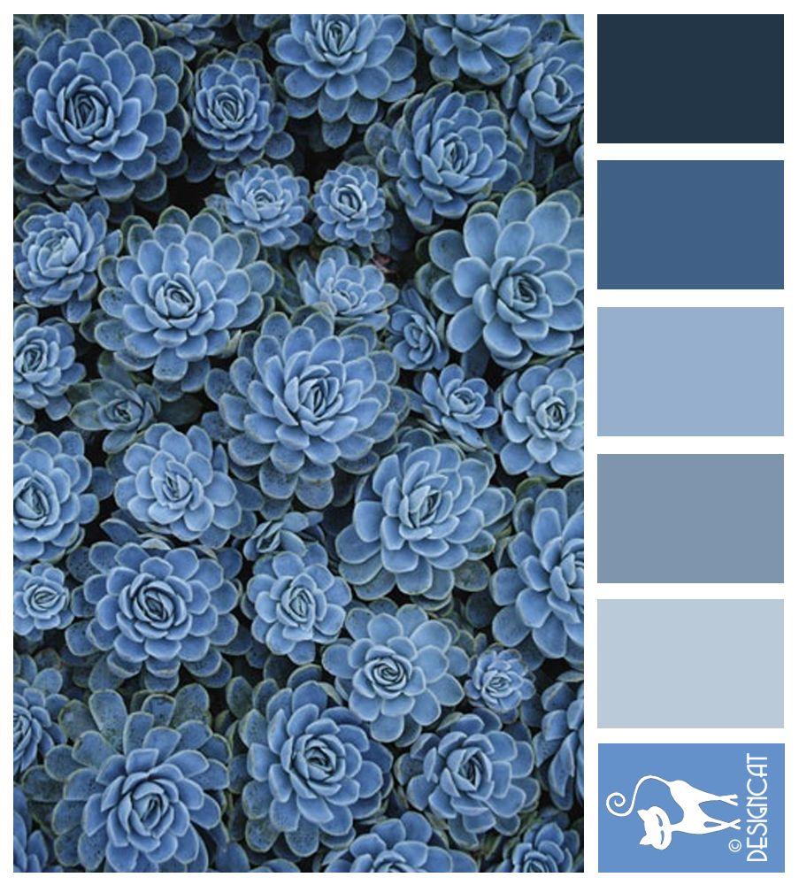 Blue Sedum Navy Blue Grey Slate Pastel Designcat Colour