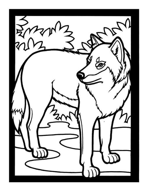 Free Gray Wolf Lapbook and Unit Study   PROYECTO \