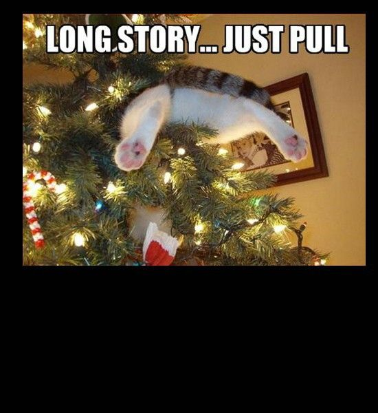Funny Photos, Cat Stuck In Christmas Tree Long Story Just Pull