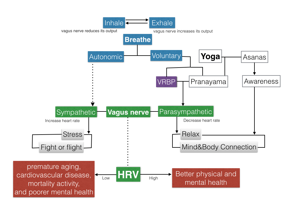 Concept Map Increase heart rate, Mind body connection