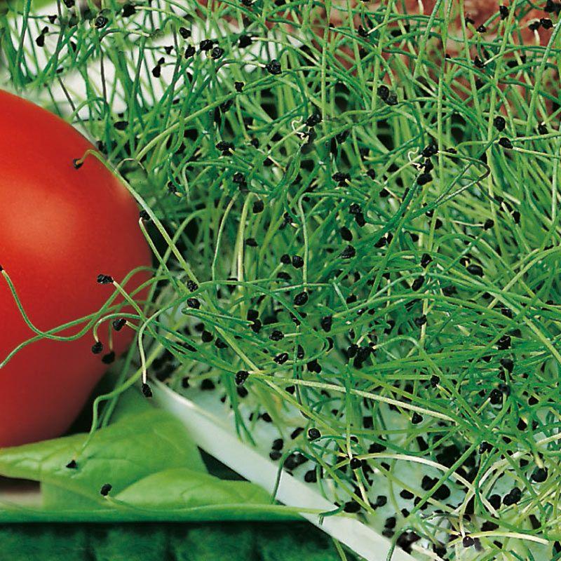 45 Affordable Diy Design Ideas For A Vegetable Garden: Purjolök, Groddar, Lök