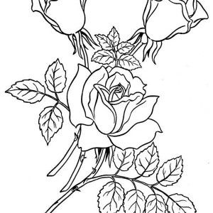 Roses Garden Of Rose Coloring Page