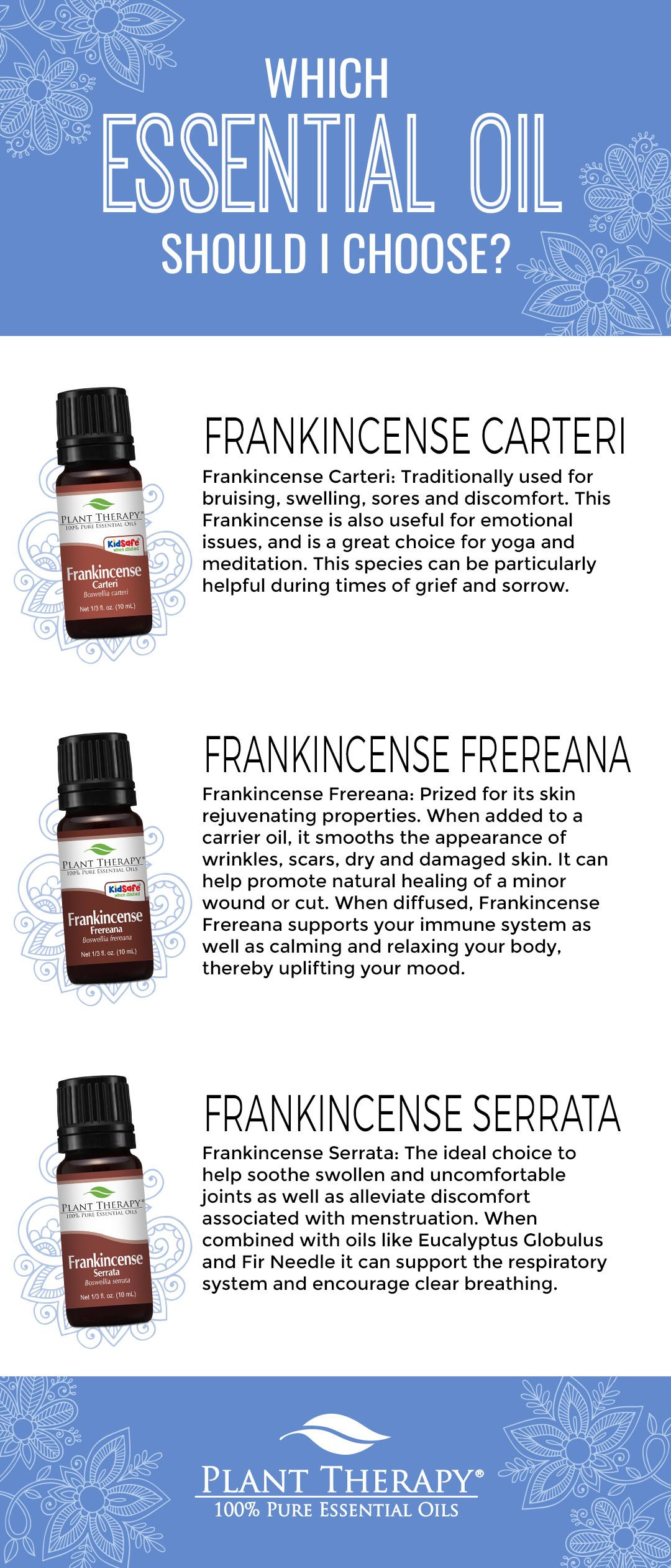 Which Frankincense Should You Choose Everyday Essentials Plant Therapy Essential Oils Frankincense Essential Oil Uses Plant Therapy Oils