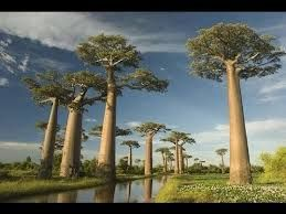 Baie de Baly NP - Madagascar