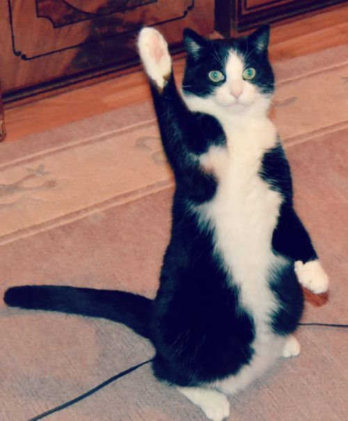 Cat With Paw in the Air