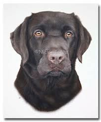 Image Result For How To Draw A Labrador Dogs Pinterest