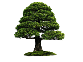 Tree Png Images Pictures Download Free Bonsai Tree Types Bonsai Tree Bonzai Tree