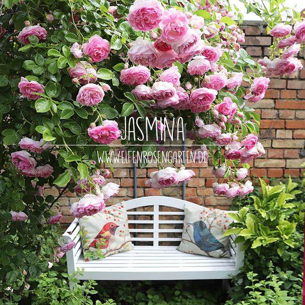 Elfenrosengarten garten Pinterest Gardens - schoner garten mit wenig geld
