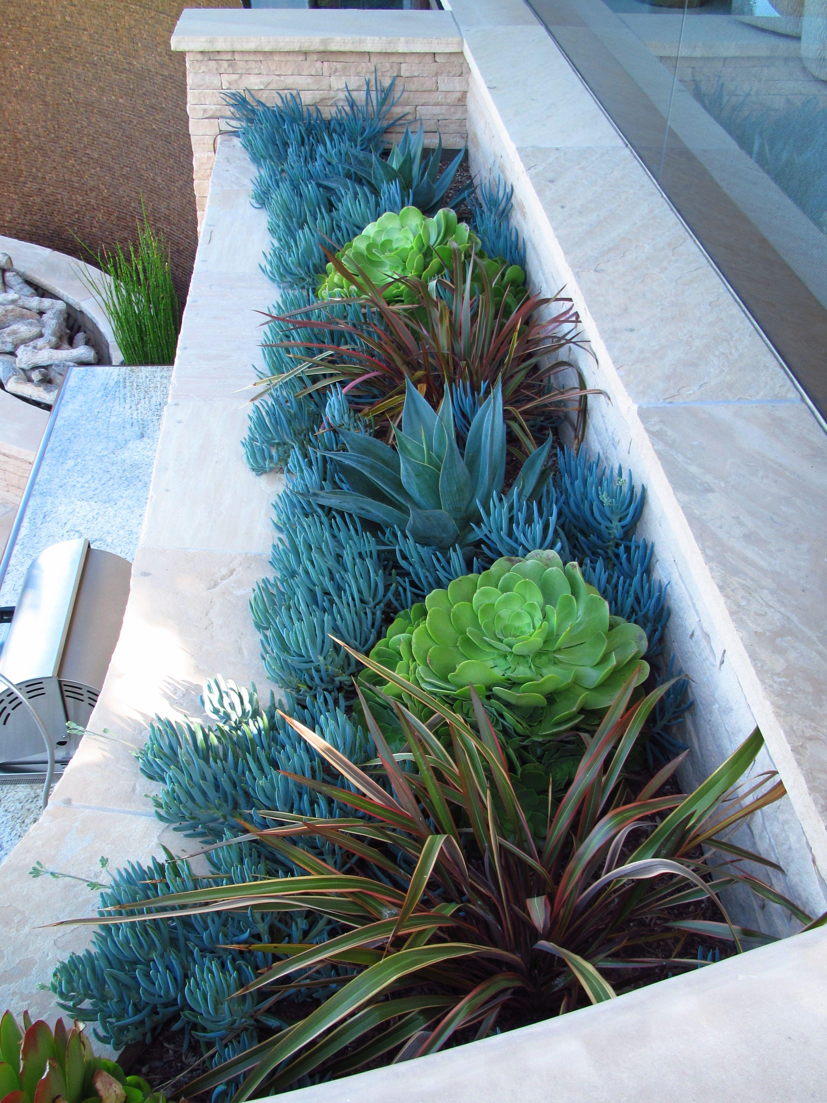succulents ca friendly http rogersgardenslandscape com on inspiring trends front yard landscaping ideas minimal budget id=47405