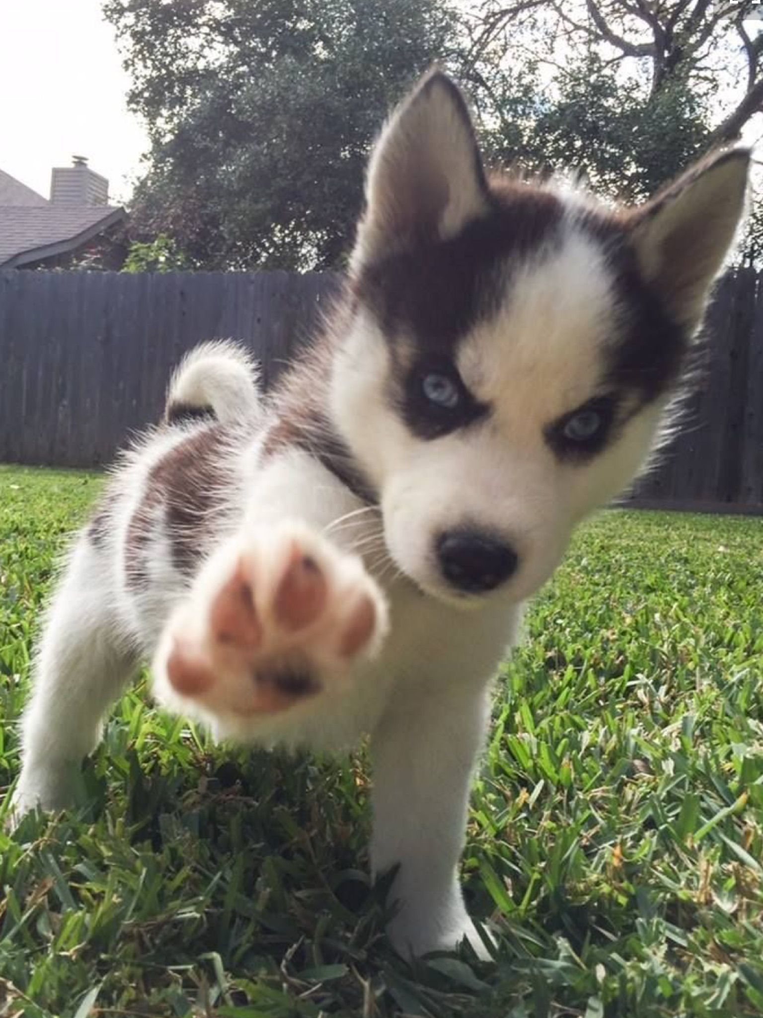 Pin By Maddi Rae On Funny High Five Cute Animals Cute Baby Animals Puppies