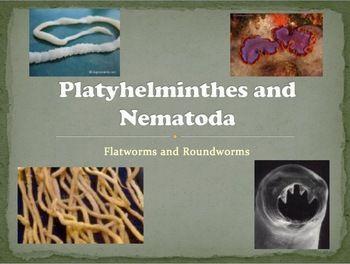 anelide platyhelminthes și nematode