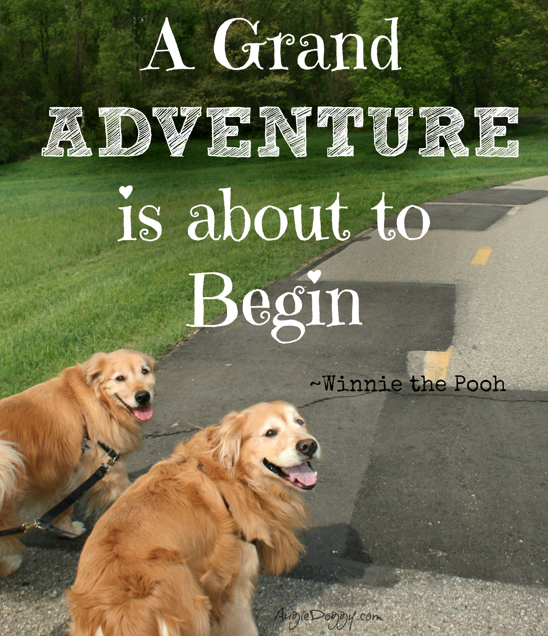 We Re Going On A Walk Come Join Us Golden Retriever Mom Dogs