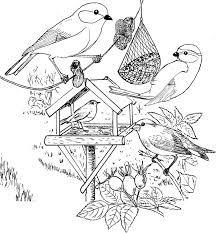 afbeeldingsresultaat voor ijsvogel kleurplaat vogels