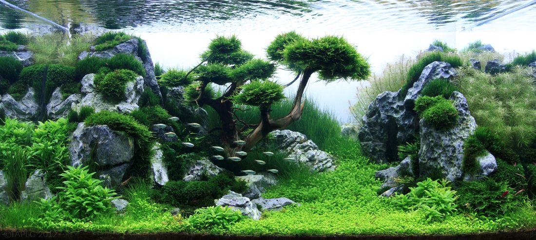 Aquascape Design des paysages d'aquariums | aquatic plants, aquariums and aquascaping