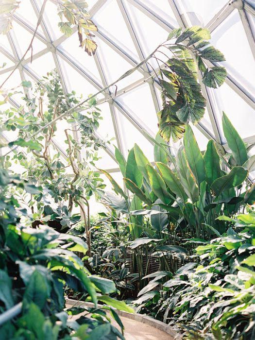 0584c2a85fc4ba188608c62da9aefed3 - Mt Coot Tha Gardens Opening Hours