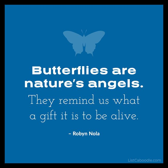 Quote: Butterflies Are Nature's Angels