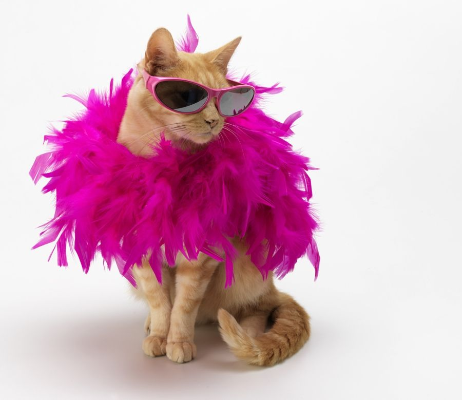 "Cat Diva ""Pretty in Pink"""