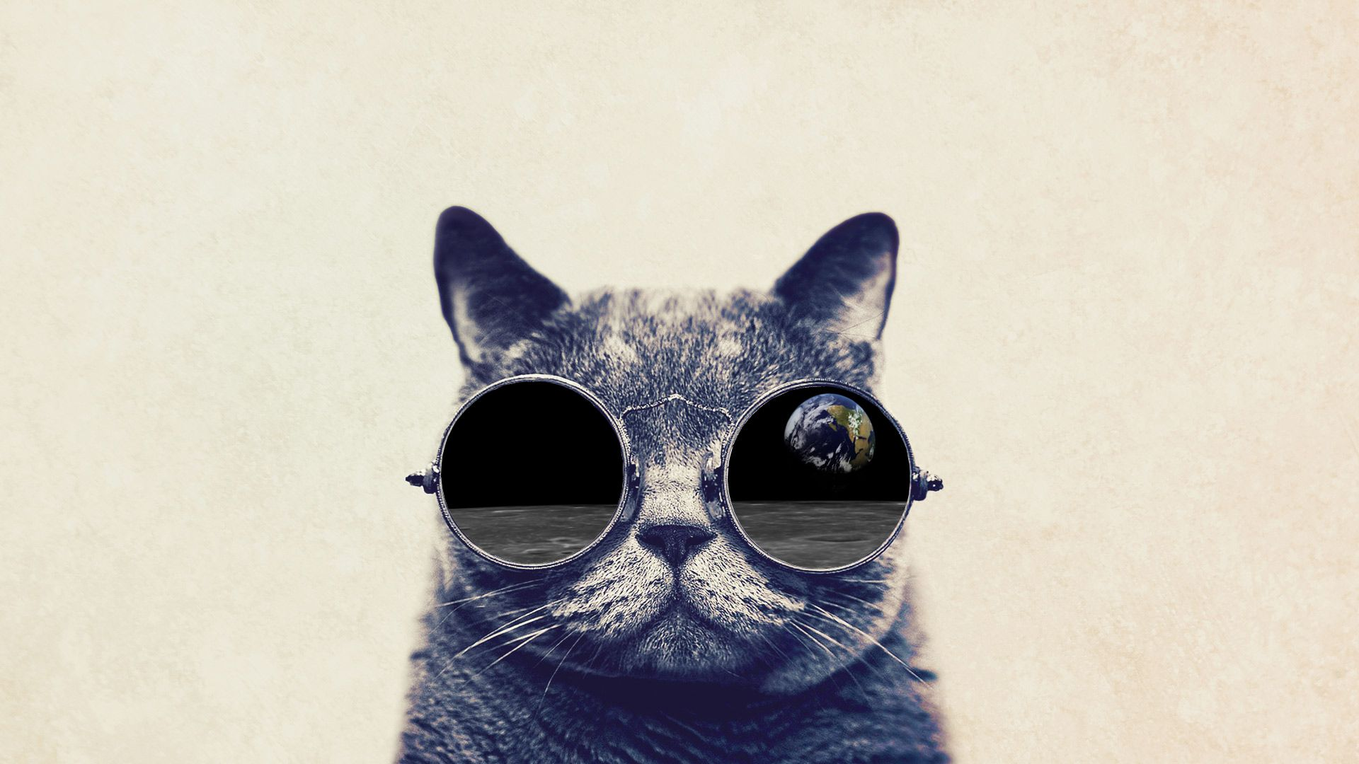 Funny Cat With Big Glasses wallpaper Techno Pinterest