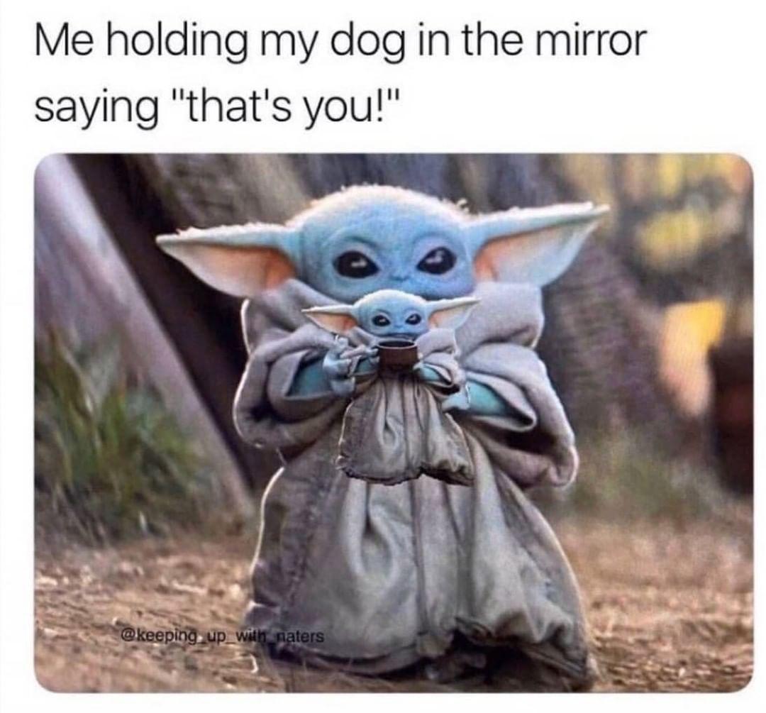 Hunde Katzen Sind Freunde Netter Hund Und Welpen Netter Hunderassen Netter Hund Lustig Netter Hund Memes Divertidos Dibujos Animados Divertidos Meme Gracioso