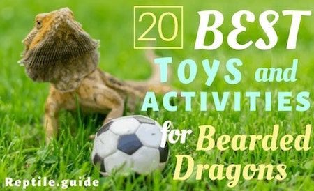 20 Fun Bearded Dragon Toys & Activities for Healthy Enrichment