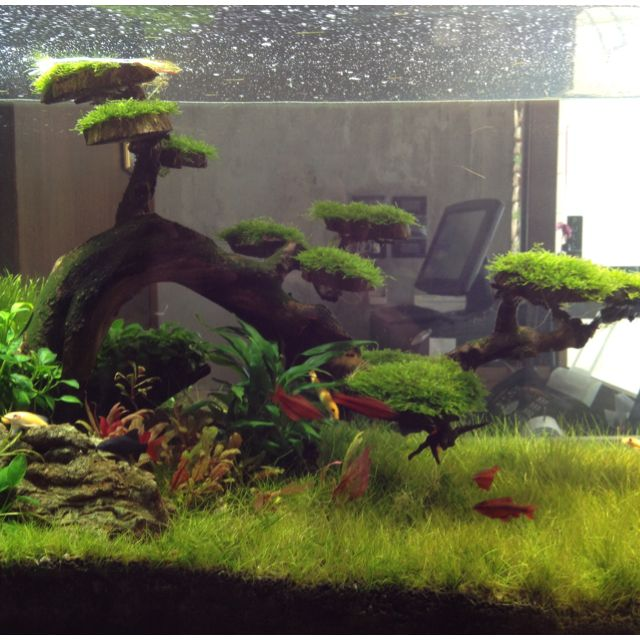 Underwater bonsai.