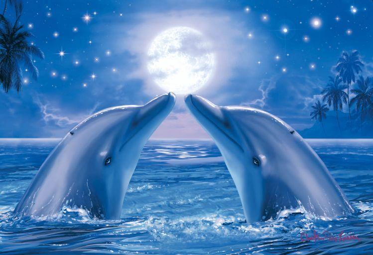 17 ausmalbilder delfin sonnenuntergang downloaden