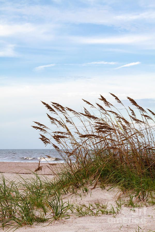Sand Dunes And Sea Oats By Dawna Moore Photography Beach Scenes Beach Pictures Scenery