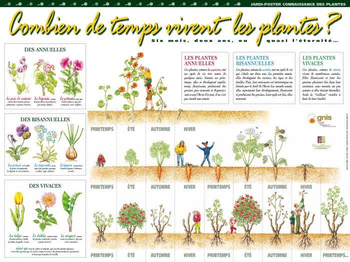 les jardi posters pour pr senter aux l ves les activit s de jardinage potager et jardin l. Black Bedroom Furniture Sets. Home Design Ideas