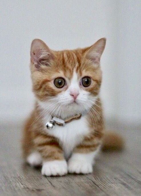 Very cute kitten! Kittens cutest, Cute cats, Cute cats