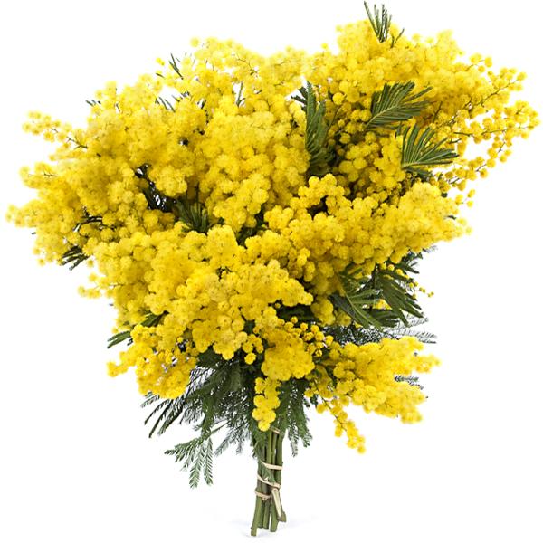 un bouquet de mimosas fleur de mimosa pinterest chambre jaune le mystere et the neighbourhood. Black Bedroom Furniture Sets. Home Design Ideas