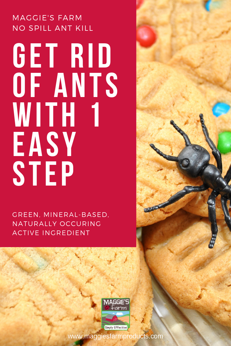 Simply Effective No Spill Ant Kill Ant remedies, Ants