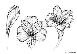 Alstroemeria Flower Tattoo Google Search Bloom Tattoo Tattoos Lily Tattoo
