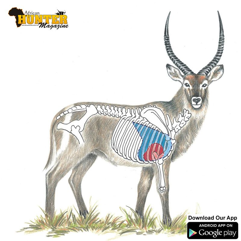 Waterbuck-shot-placement | Shot Placement and Anatomy - Where to ...