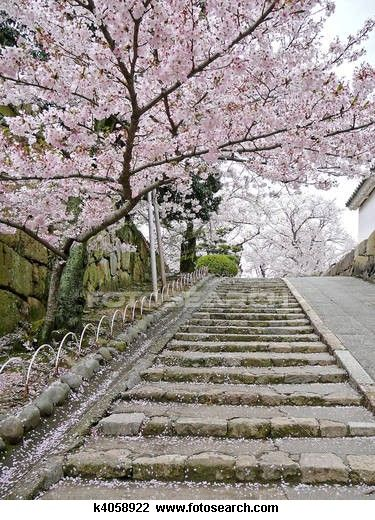 Cherry Blossoms On Stairs Stock Image K4058922 Emdr Cherry Blossom Emdr Therapy