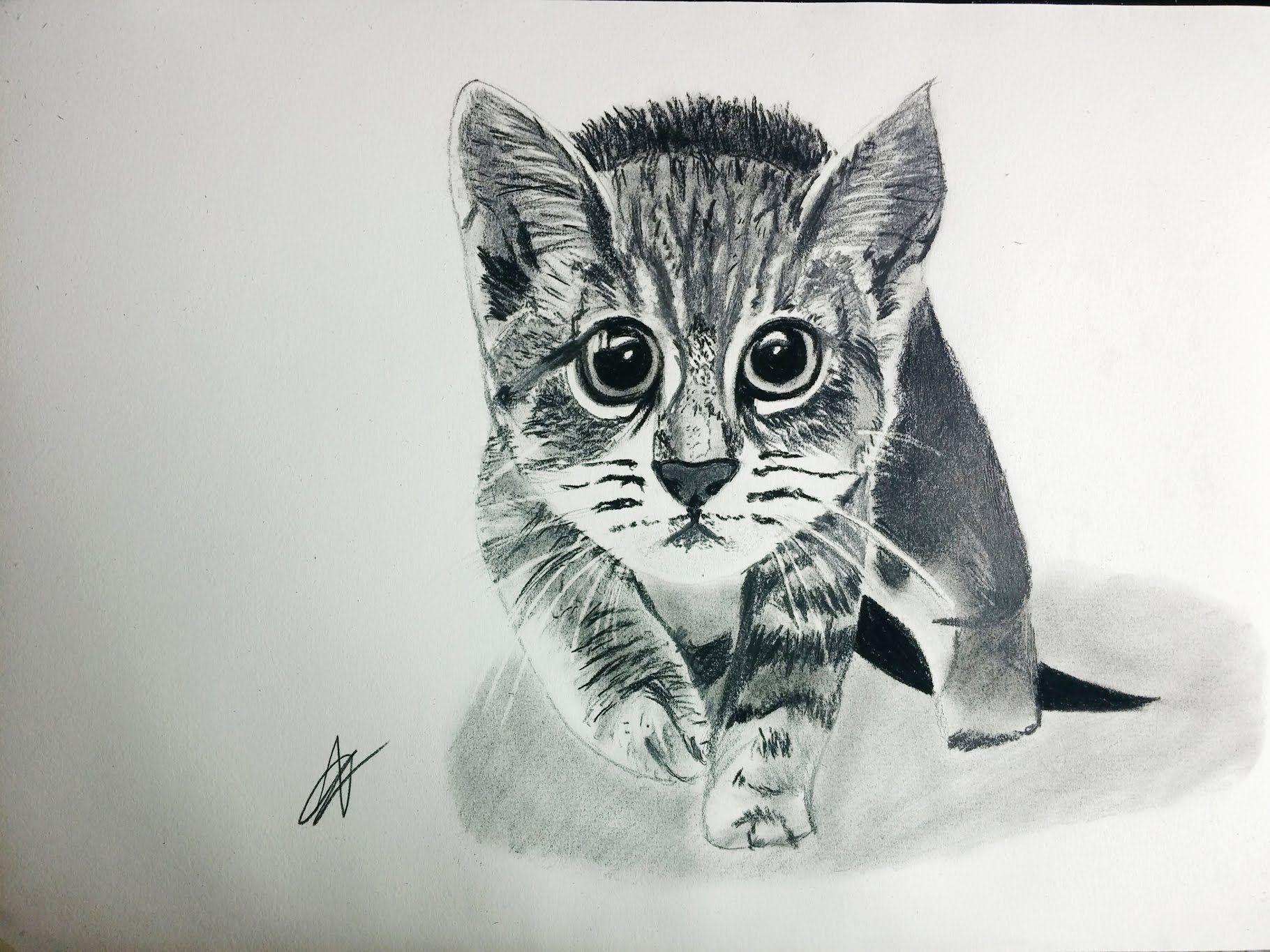Cómo dibujar un gato realista paso a paso explicado MUY FÁCIL ...