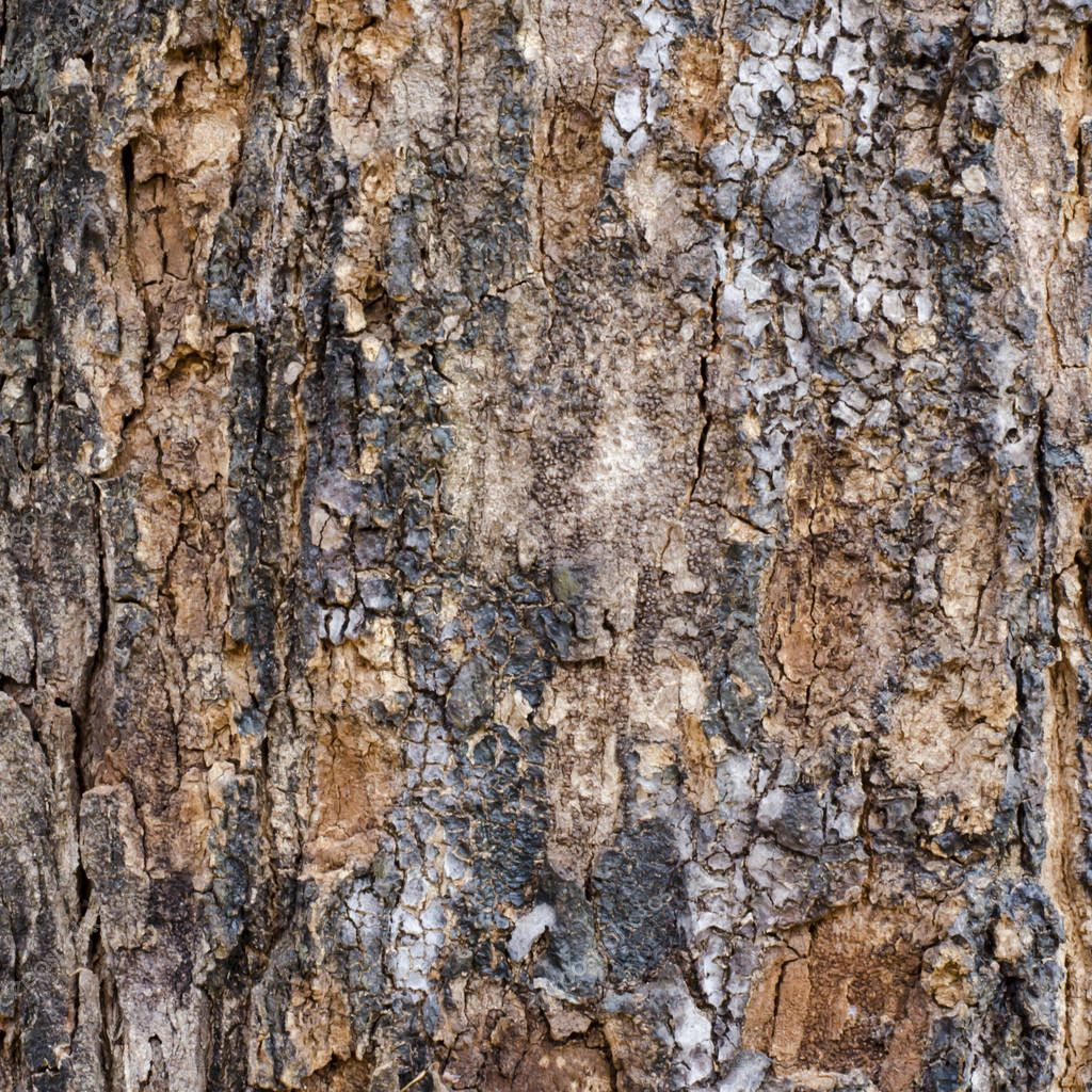 Bark Wood Texture Background - Stock Photo , #AFFILIATE, #Texture, #Wood, #Bark, #Photo #AD #woodtexturebackground Bark Wood Texture Background - Stock Photo , #AFFILIATE, #Texture, #Wood, #Bark, #Photo #AD #woodtexturebackground Bark Wood Texture Background - Stock Photo , #AFFILIATE, #Texture, #Wood, #Bark, #Photo #AD #woodtexturebackground Bark Wood Texture Background - Stock Photo , #AFFILIATE, #Texture, #Wood, #Bark, #Photo #AD #woodtexturebackground Bark Wood Texture Background - Stock Pho #woodtexturebackground