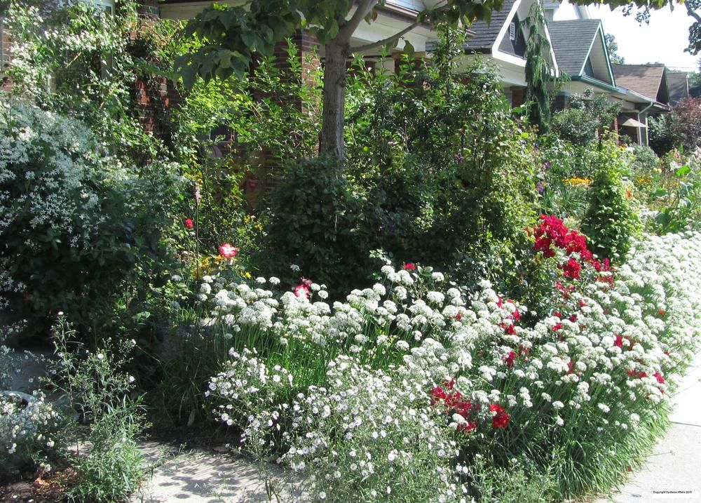 Roses and Clematises in a Small Natural Garden (All Things Plants ...