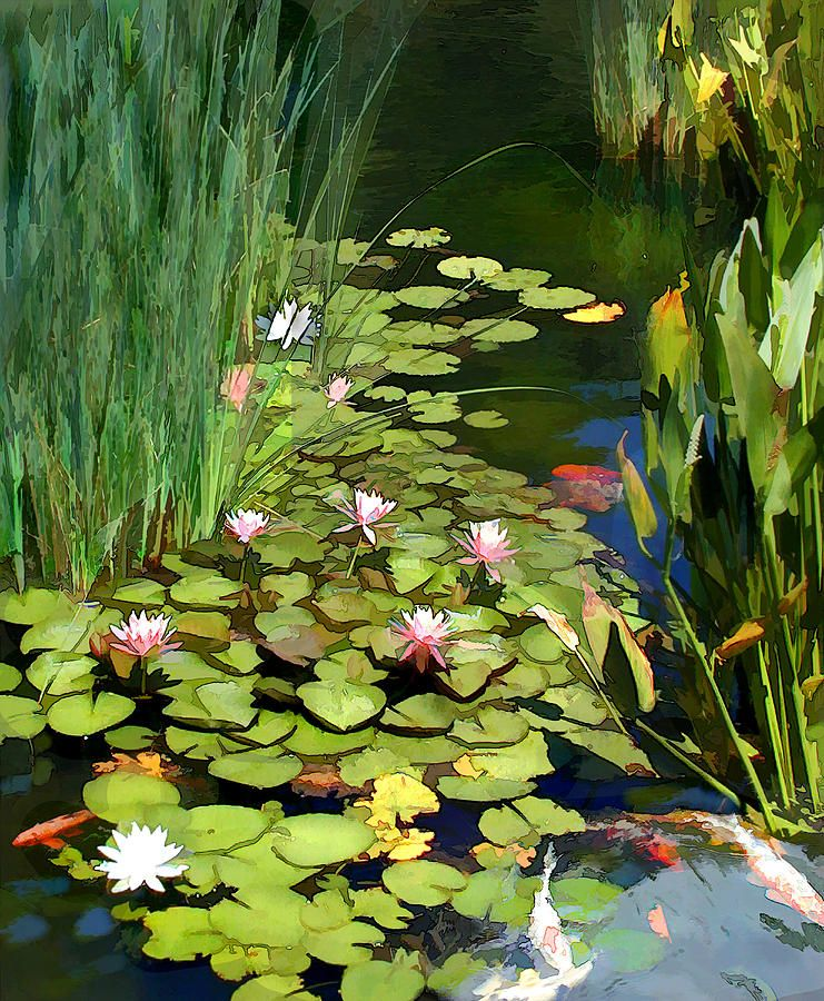 Water lilies and ponds water lilies and koi pond for Koi pond water