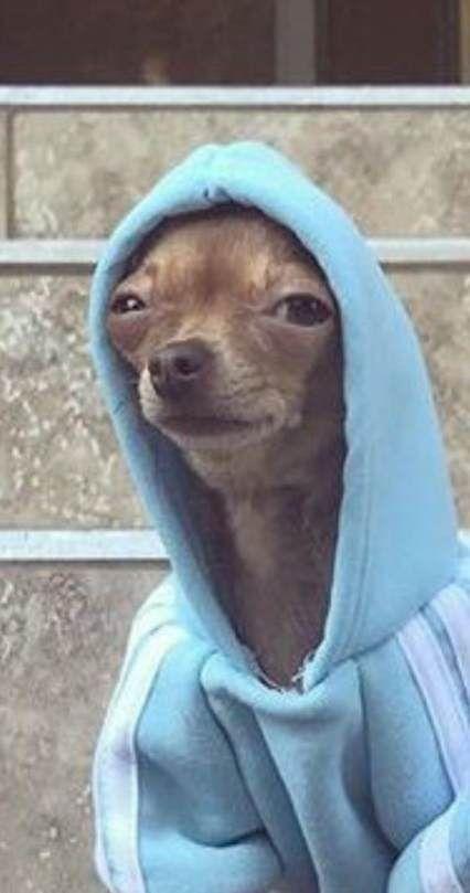 Photo of Neue Hunde Tumblr lustige Gesichter Ideen – #Gesichter #Hunde #Ideen #Lustige #n…