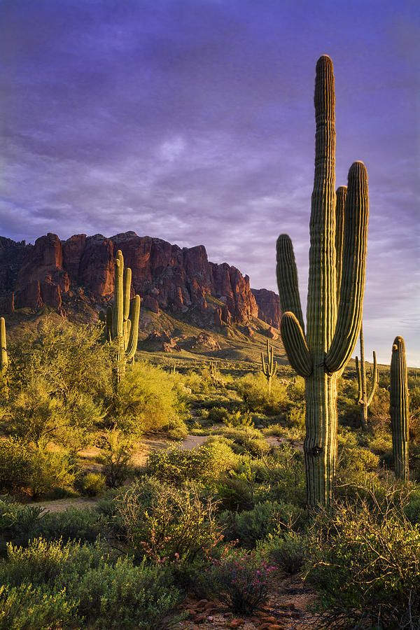 In The Desert Golden Hour By Saija Lehtonen Arizona Landscape Desert Landscaping Landscape Photography