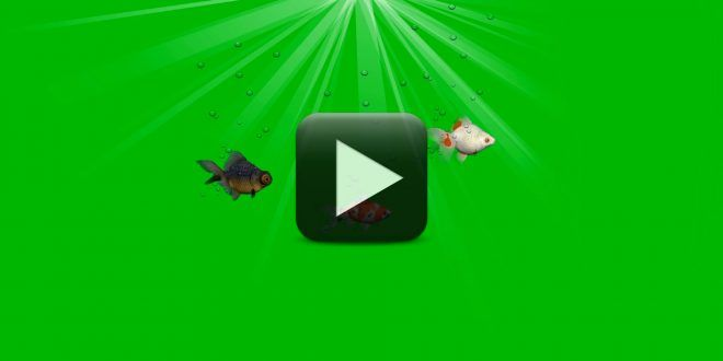 Fish Green Screen Footage Free Download Greenscreen Green Screen Footage Free Green Screen