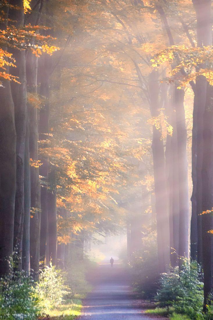 ~~Lost in autumn | crepuscular rays light a foggy fall ...