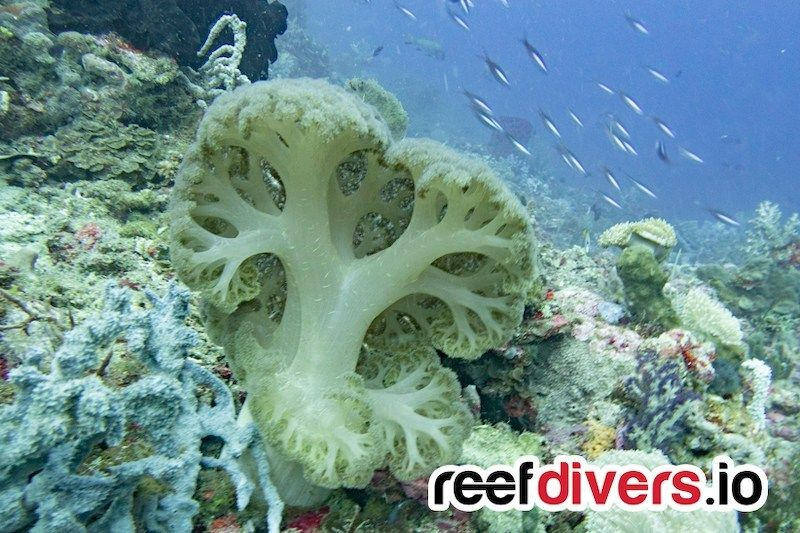 How To Become A Coral Gardener