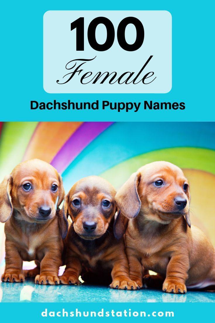 Best Dachshund Names Of 2020 Puppy names, Dachshund