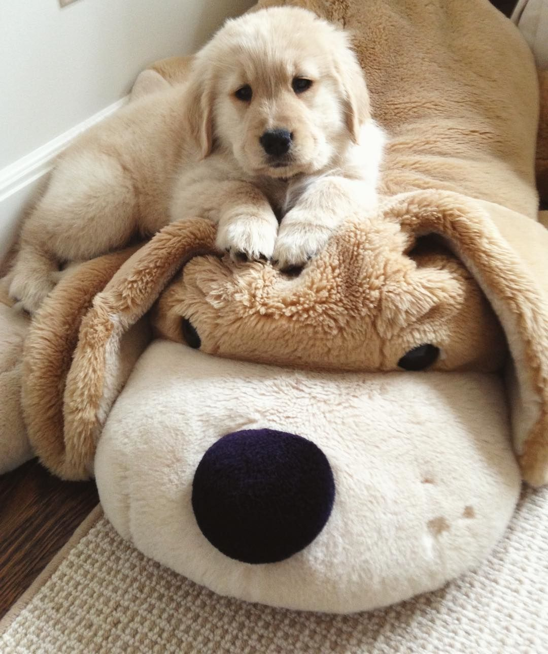 Pin By Carol Campbell On Golden Retriever Puppies Dogs Golden