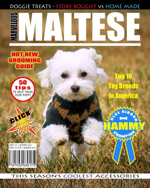 Meet Professor Hamilton (he makes me call him that) - He's a rescue from a local shelter - He's been with us for about a decade & he never lets me forget how lucky I am to have him in my life - This is a mag cover layout I came up with in photoshop after shooting this image in our back yard  #maltese #photoshop #magazine #magcover #animalshelter #rescue #professorhamilton