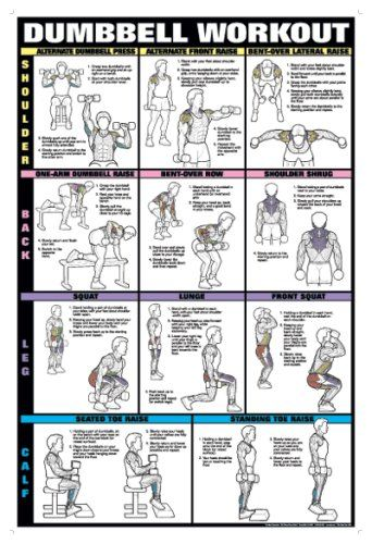 Dumbbell Workout Ii 24 X 36 Laminated Chart Shoulder Back Leg