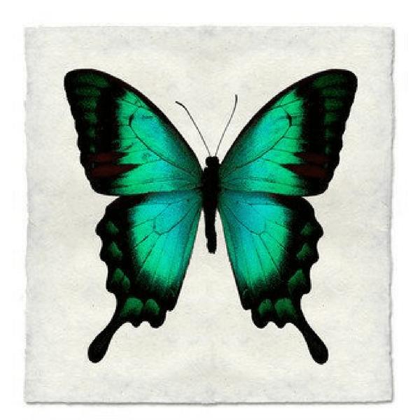 Handmade Butterfly Print - Barloga Studios - Sugarboo and Co
