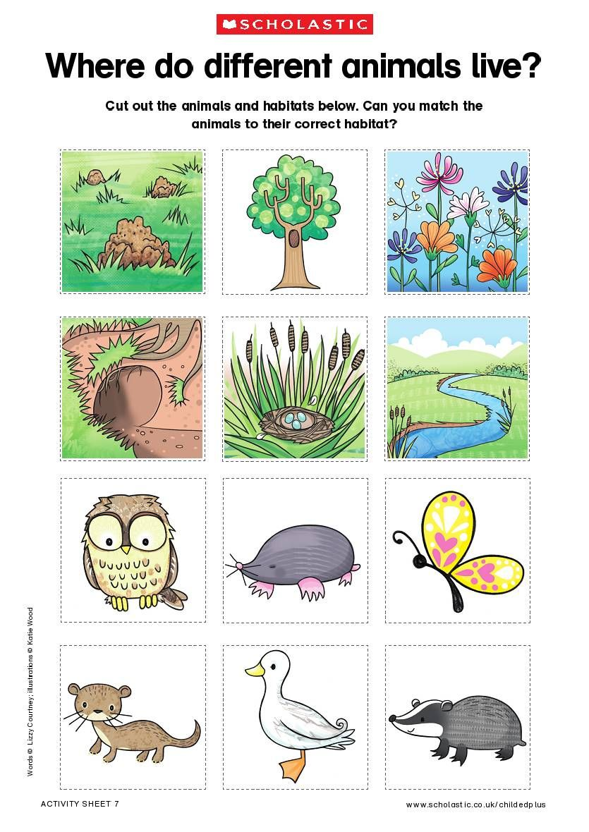 Angol Feladatok Mondokak Szinezok Science Animal Habitats Preschool Animal Habitats Kindergarten Learning Videos [ 1180 x 835 Pixel ]